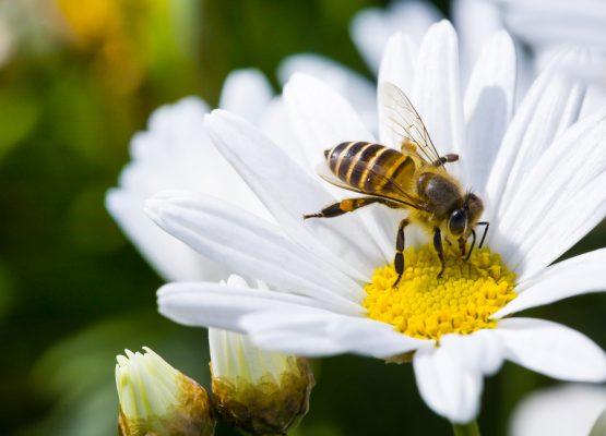 Perché se muoiono le api la nostra dieta diventa povera